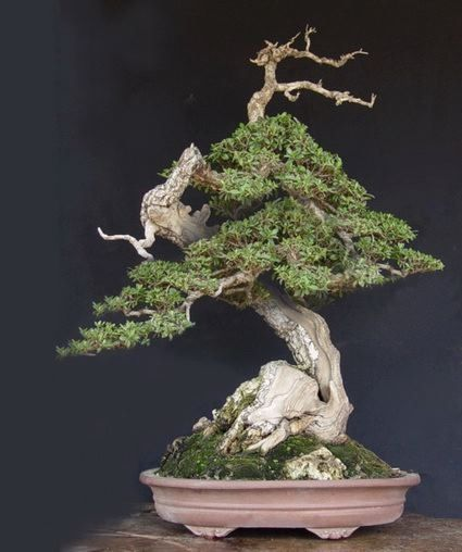 Bonsai.I really love the look of Bonsai trees.Please check out my website thanks. www.photopix.co.nz