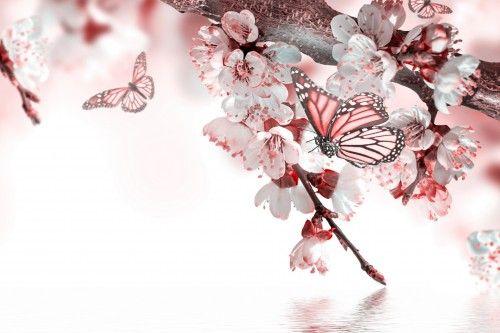 Oboi Vesna Vishnya Makro Fotoshop Babochki Cvety Vetka Belyj Fon Na Rabochij Stol Kartinki S Razdela Vesna Prayer For Today Prayers Flowers
