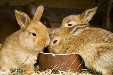 small rabbits - feeding time