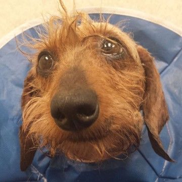 Pin On Doxies In Need