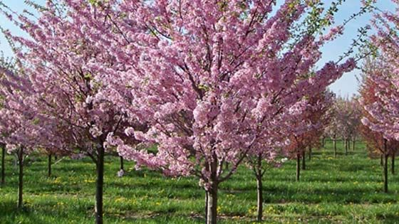 Fruit Trees For Yummy Pies And Desserts Fruit Trees Peach Trees Waterwise Garden