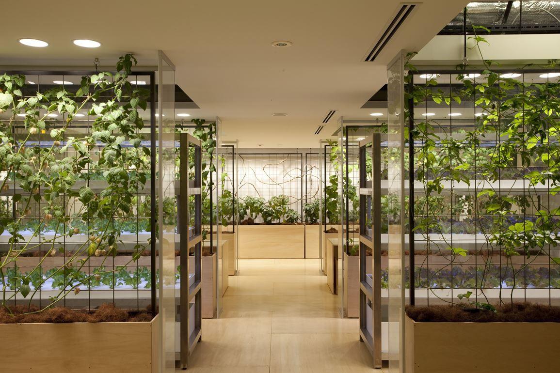 Pasona HQ - Picture gallery | vertical farm -Pasona HQ Tokyo / Japan ...