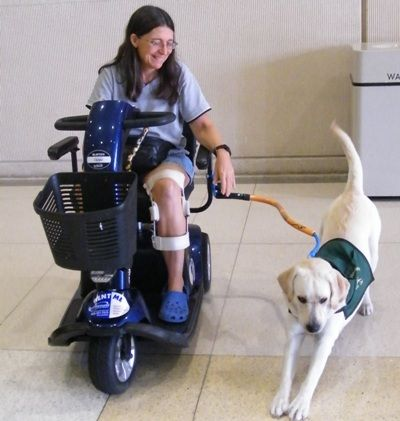 Wheelchair Dog Leash By Bike Tow Leash Dog Wheelchair