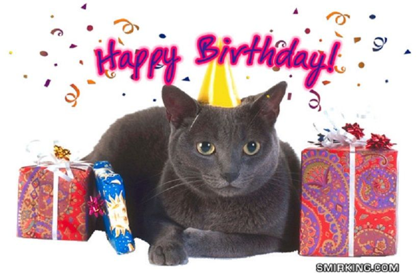 Funny Happy Birthday Siamese Kitten Photograph Card