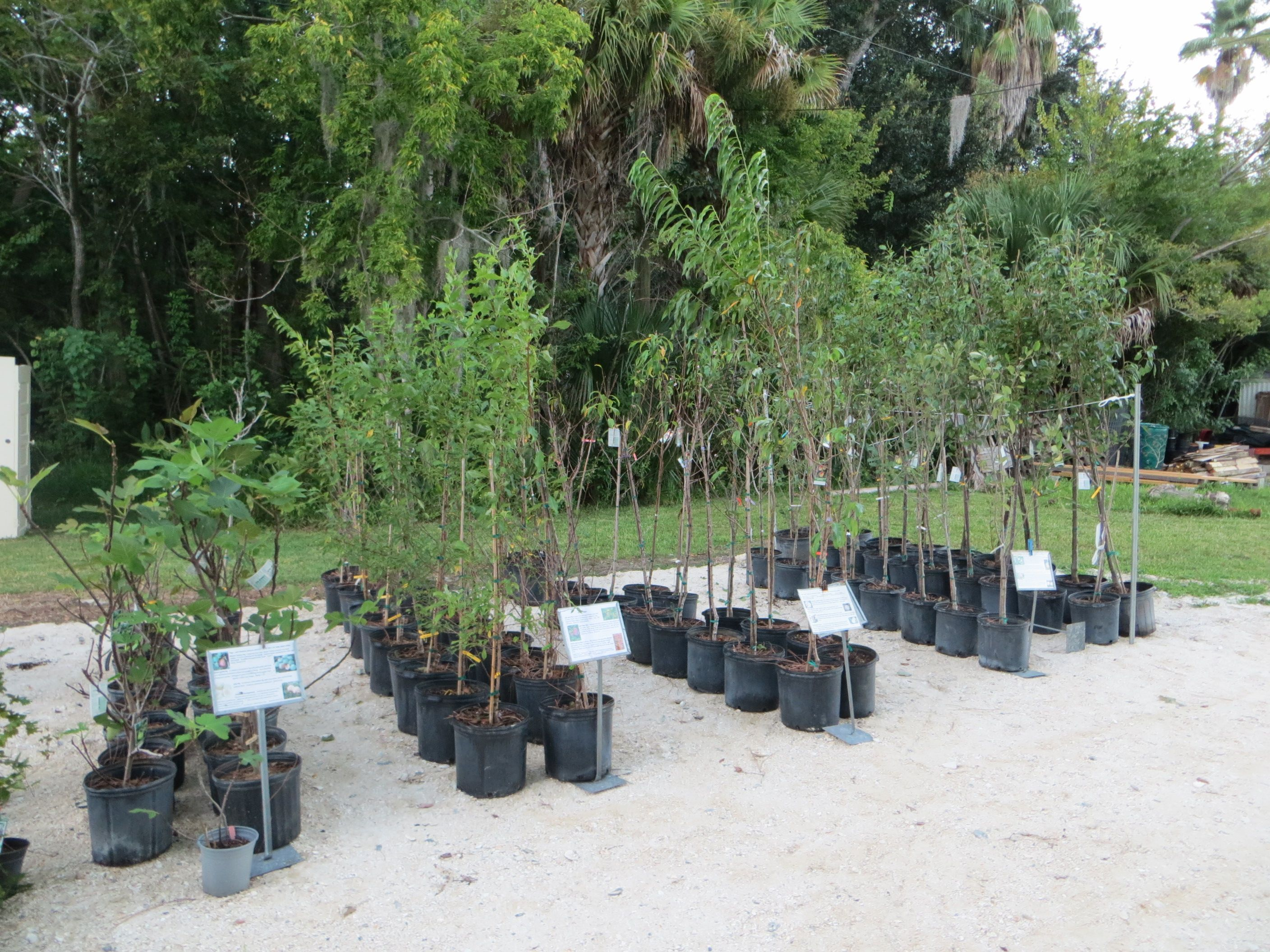We stock assorted low chill and semi tropical fruit trees and shrubs