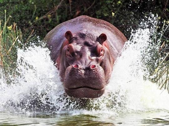 Pin Von Sonja Berner Auf Tiere Kunterbunt In 2020 Mit Bildern Tiere Ausgestopftes Tier Natur Tiere