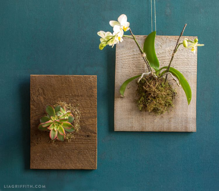Mounted Orchids And Succulents Living Walls Orchid And