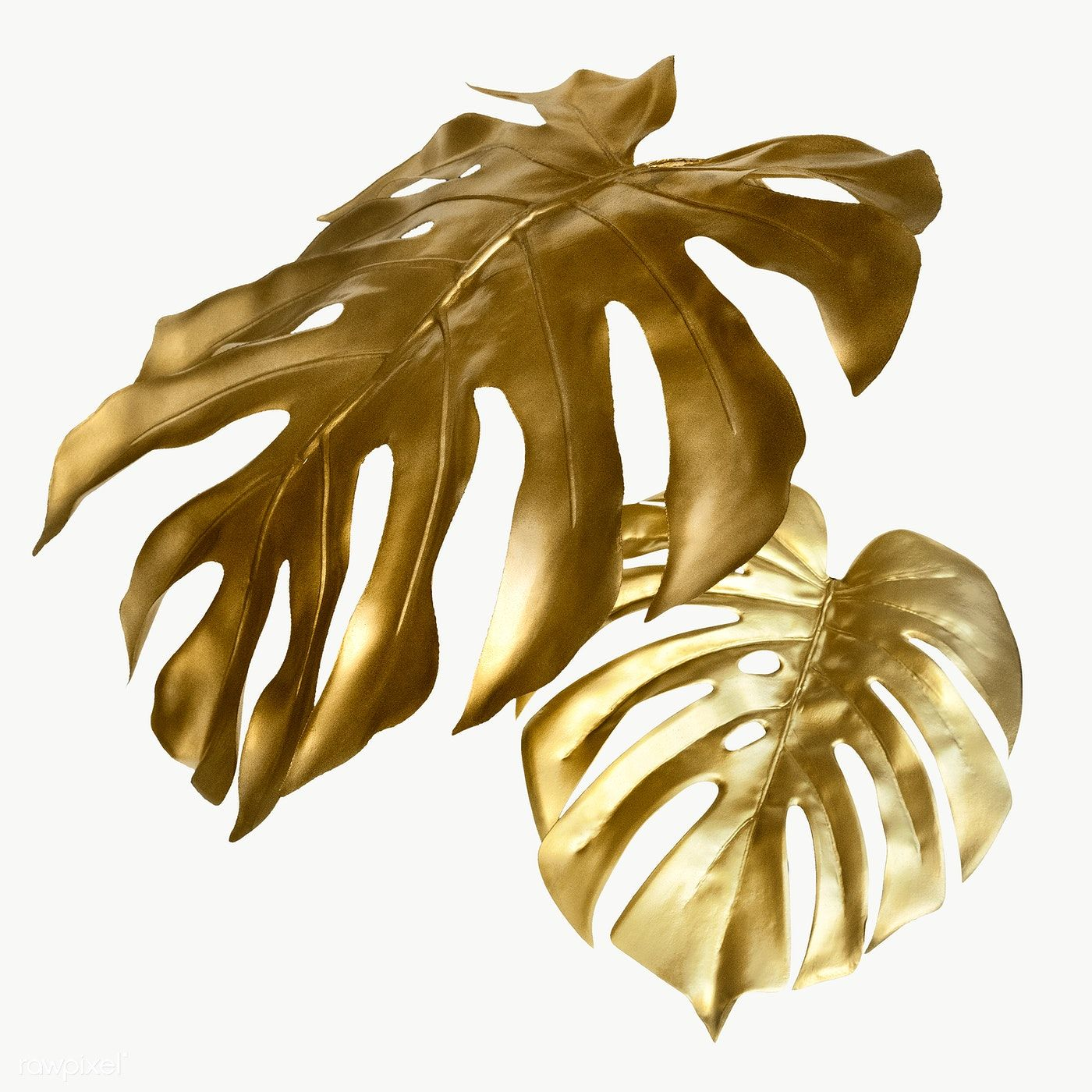 Shiny Golden Monstera Leaves Transparent Png Free Image By Rawpixel Com Teddy Rawpixel