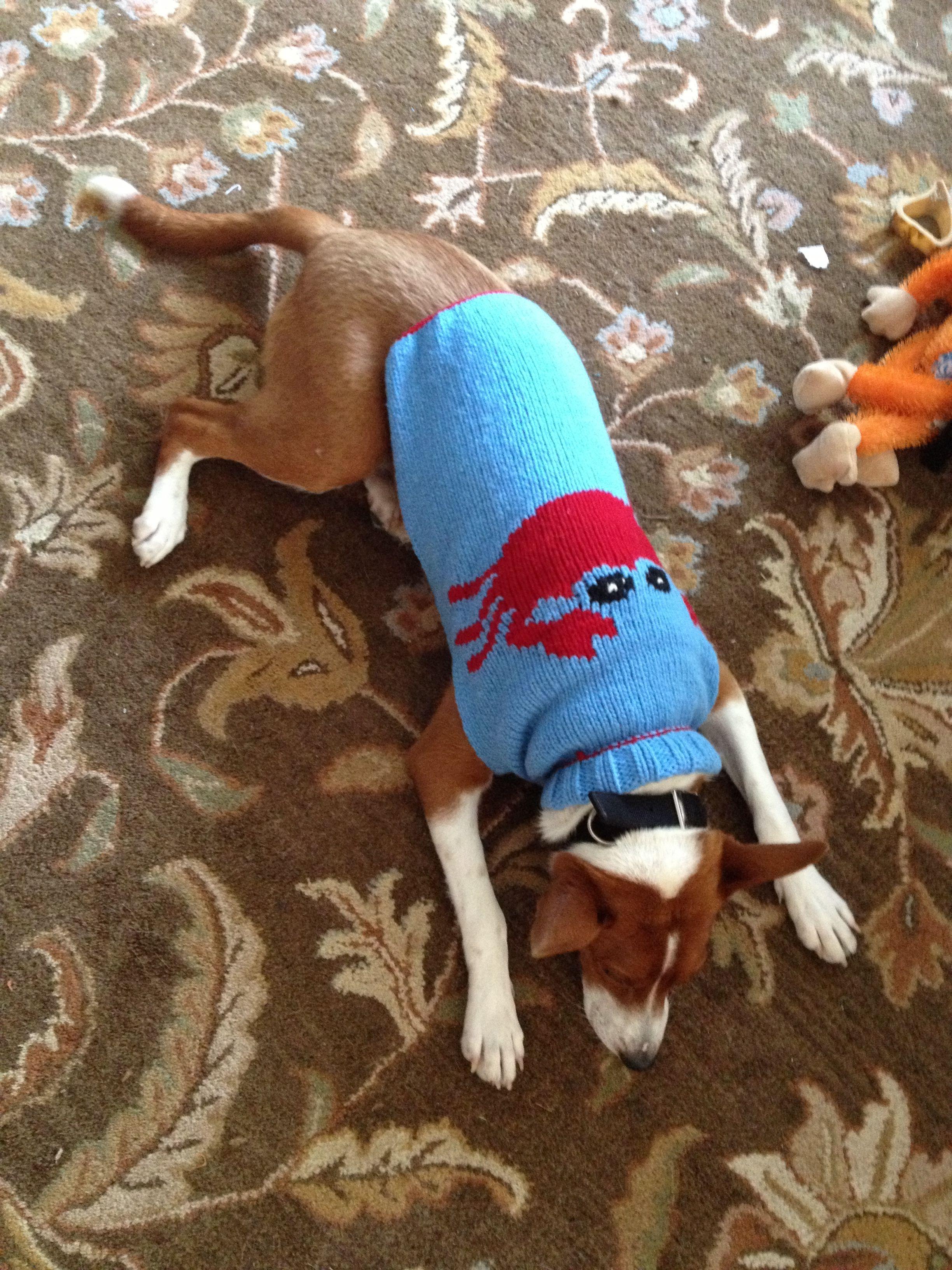 Designer Sweater Pet Valu Stan Basenji Dogs Of The World Pets Dogs