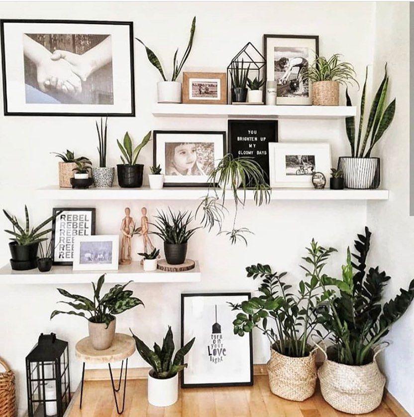 Photo of BLIS on Instagram: Plenty planty@bohemian_interior_decor #bohostyle #boholiving … – Photography