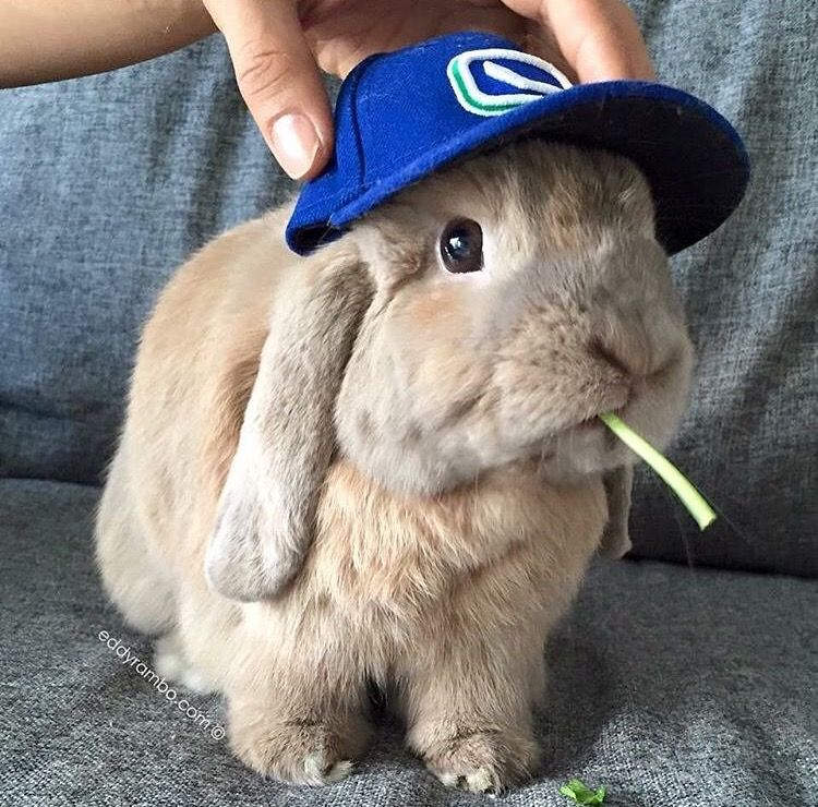 Shop the cutest hats for pet rabbits or bunnies at