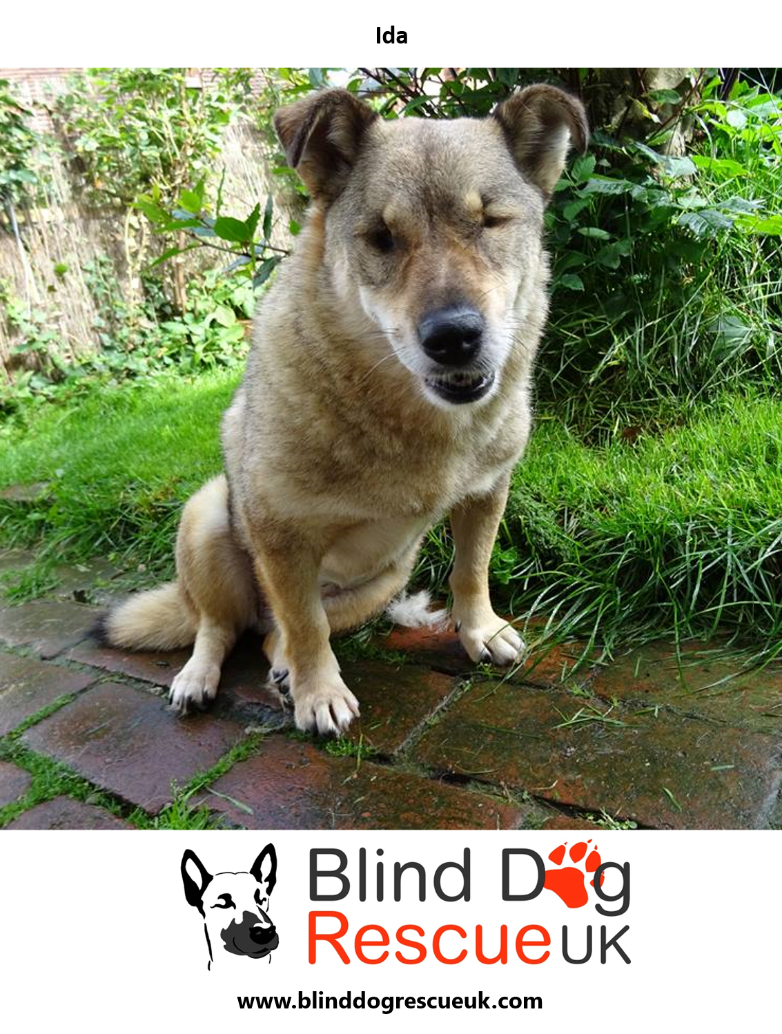 Dear Little Ida About Corgi Size Is About To Learn What Home Life Is Like In Foster She Is Low Maintenance And Already Dog Rescue Uk Blind Dog Rescue Dogs
