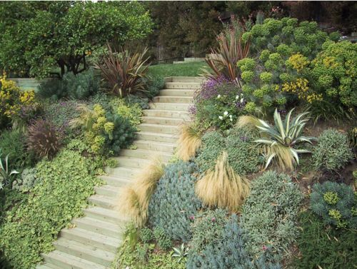 Slope Planted With Drought Tolerant Plants For No Maintenace Low Water Needs Modern Landscape Lighting Sloped Garden Modern Landscaping