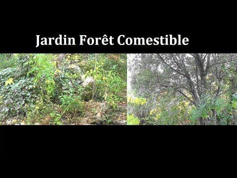 Le jardin-forêt | Potager | Permaculture, Garden et Plants