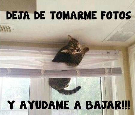 Memes Graciosos De Gatos Gatos Domesticosgatos Domesticos Meme Gato Memes Perros Perros Graciosos