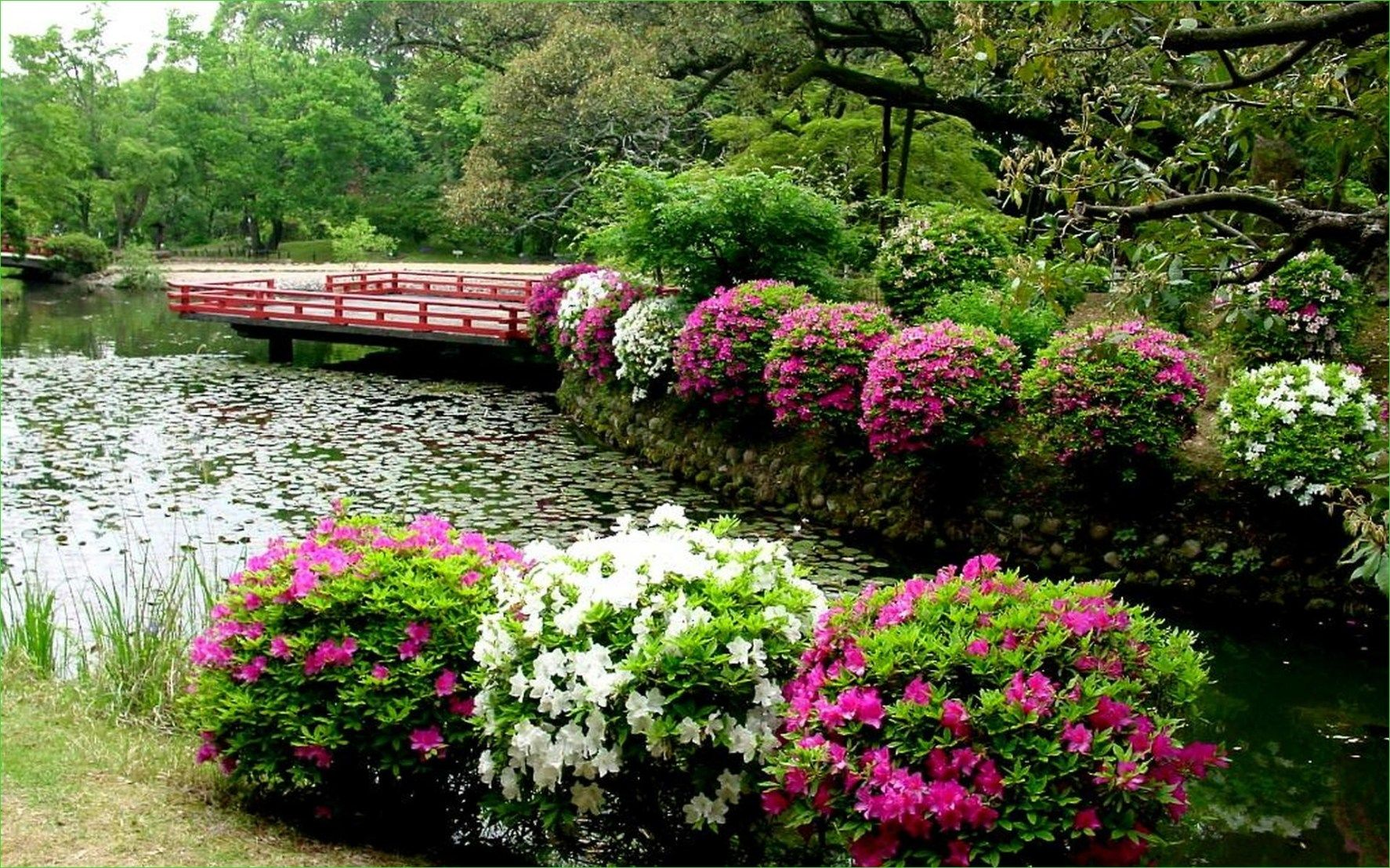 10 Beautiful Landscape with Shrubs Ideas   Daily Home List ...