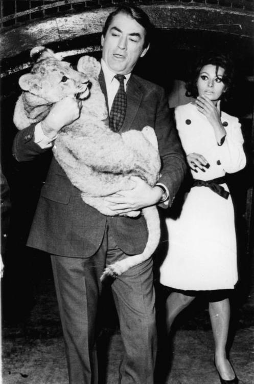 Sofia Loren x Gregory Peck x Lion