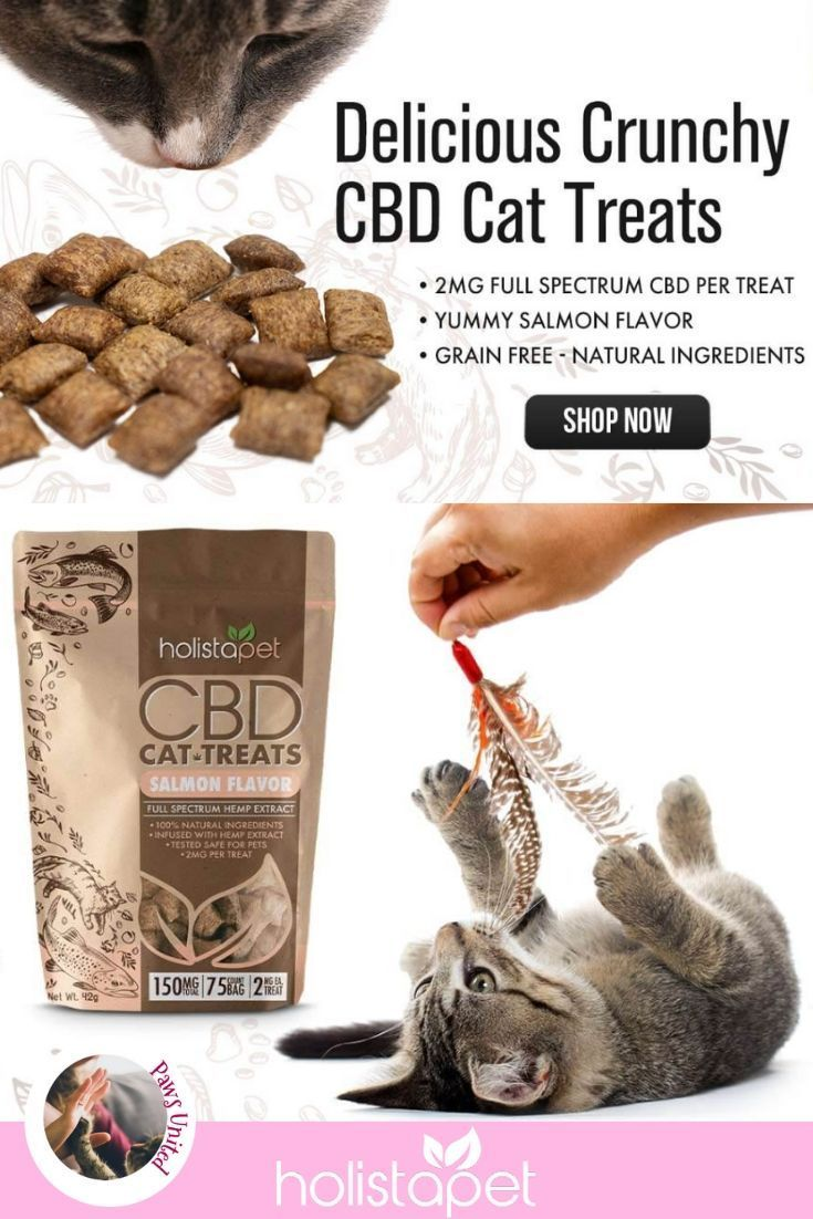 CBD Oil for Dogs Oils for dogs, Dogs, Pets