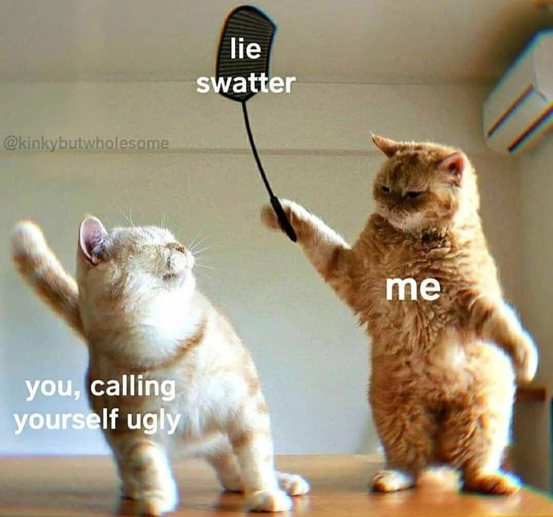 Funny Cat Memes 2020
