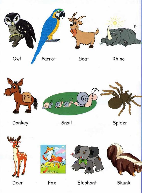 Hermosas Imágenes De Animales Domésticos En Ingles Para Descargar Gratis Y Enseñarle In Imagenes De Animales Animales En Ingles Imágenes De Animales Para Niños