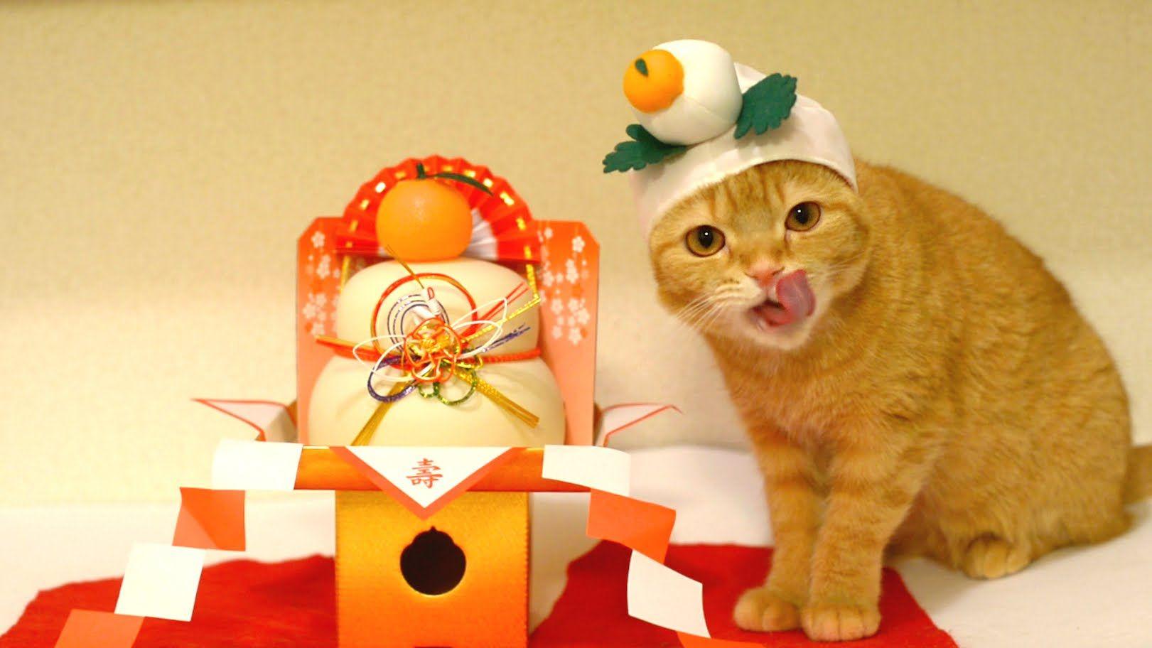 鏡餅と猫♪
