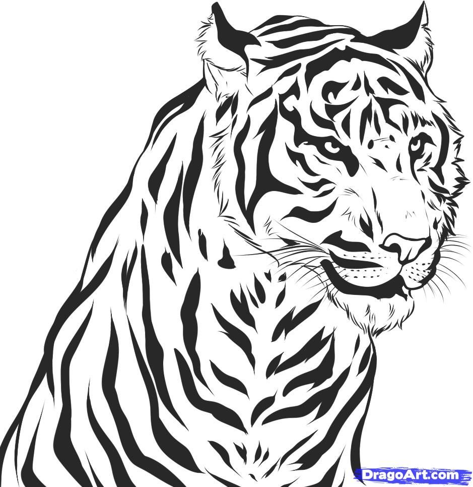 How To Draw A Realistic Tiger Draw Real Tiger By Dawn Tigre