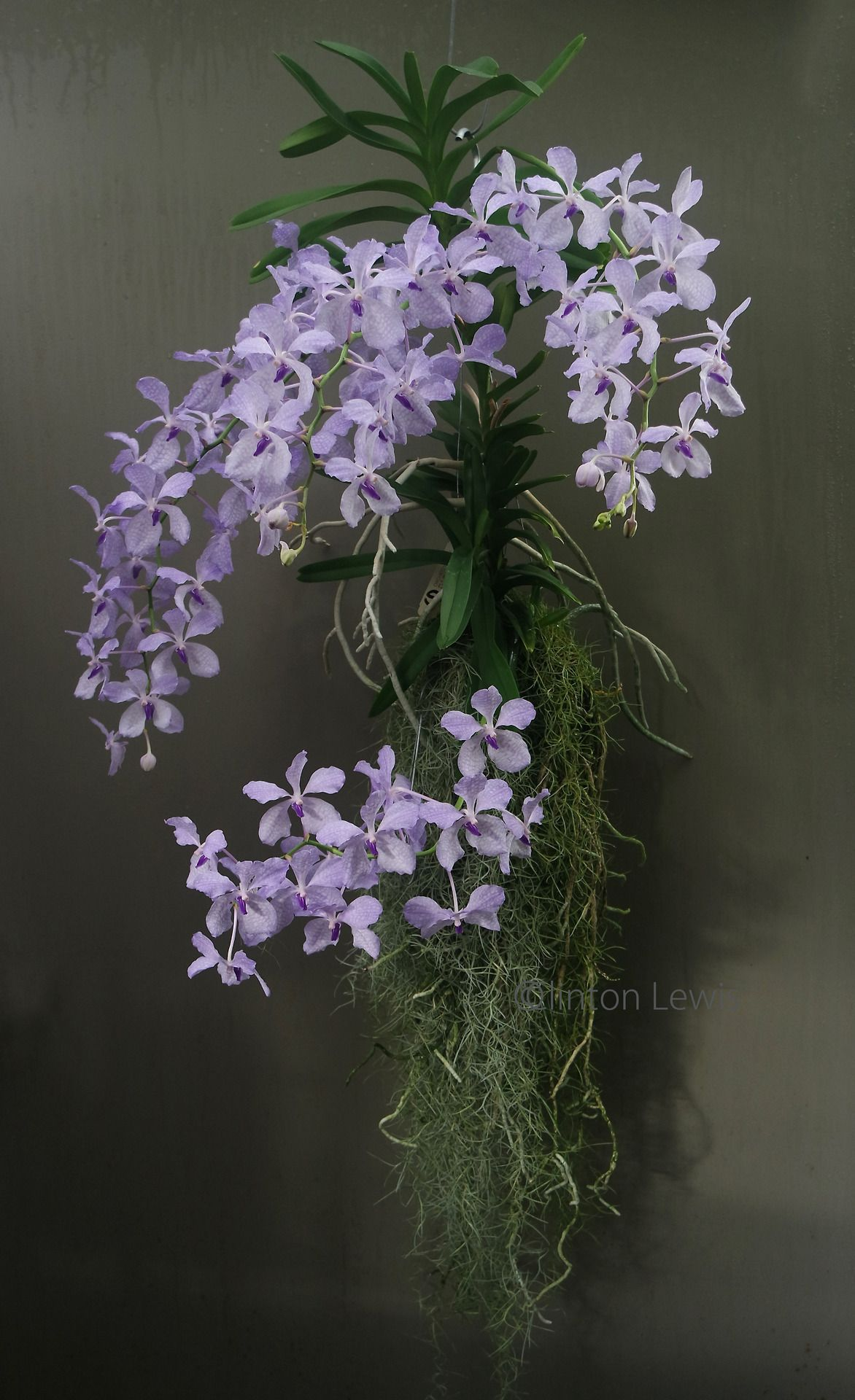 Pin On Orchid Flowers 1