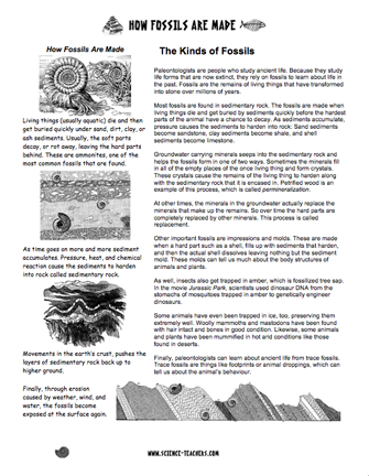 here 39 s a page of information on how fossils are made fossils geologic time earth science. Black Bedroom Furniture Sets. Home Design Ideas