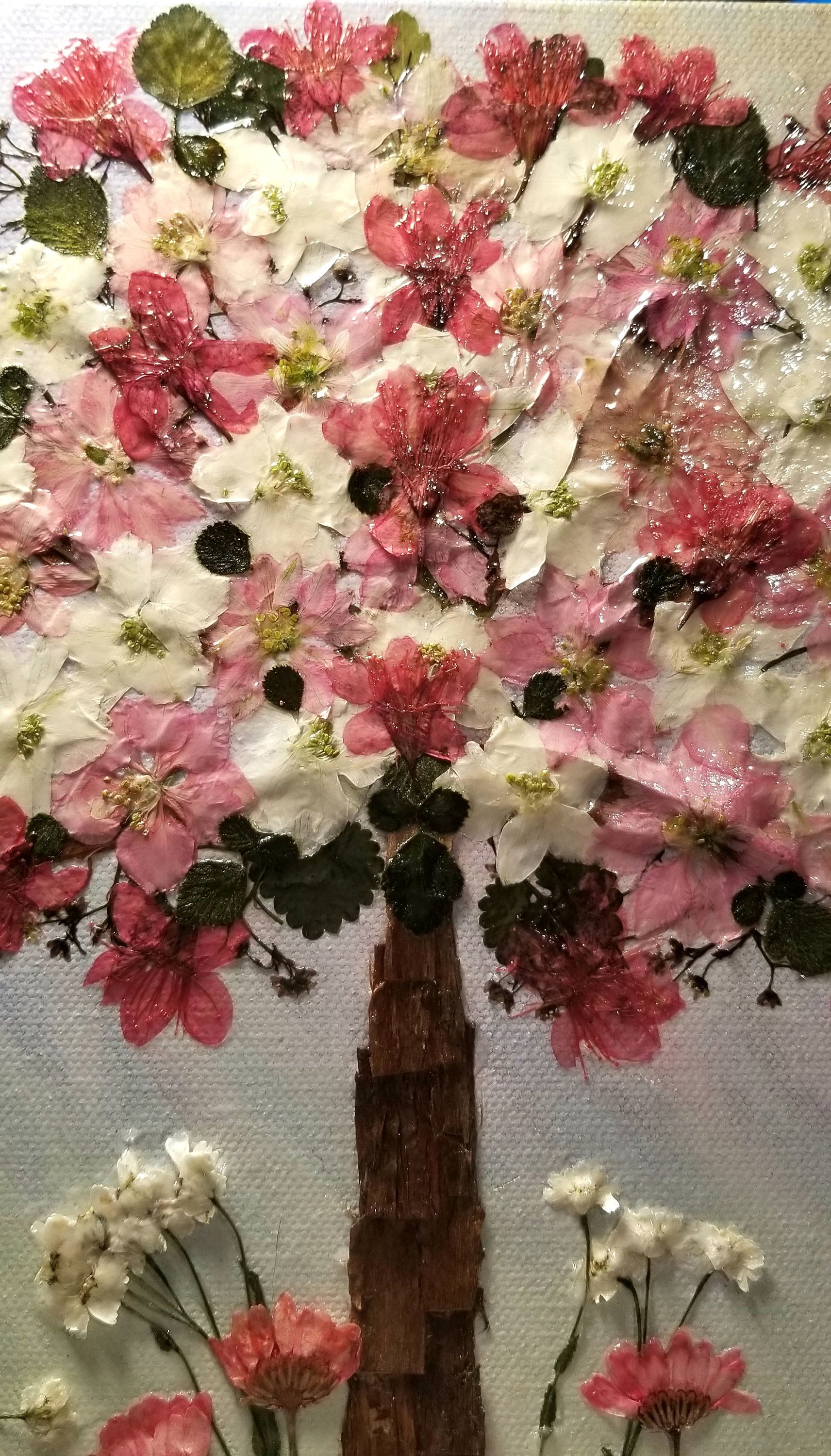 Real Pressed Pink and White Larkspur Flowers, Pressed Cherry ...
