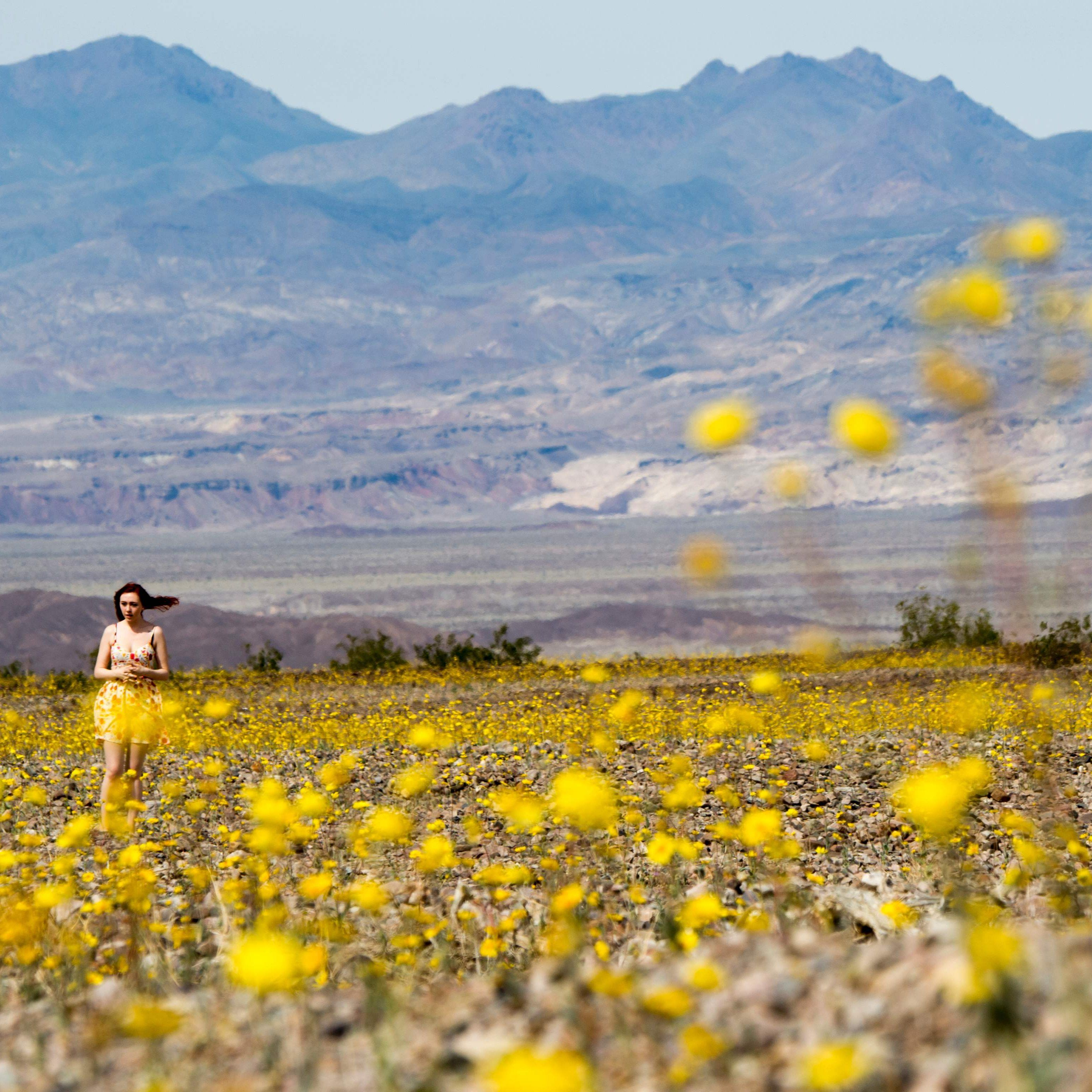 Death Valley Bursts Into Bloom In Pictures Amazing Pinterest