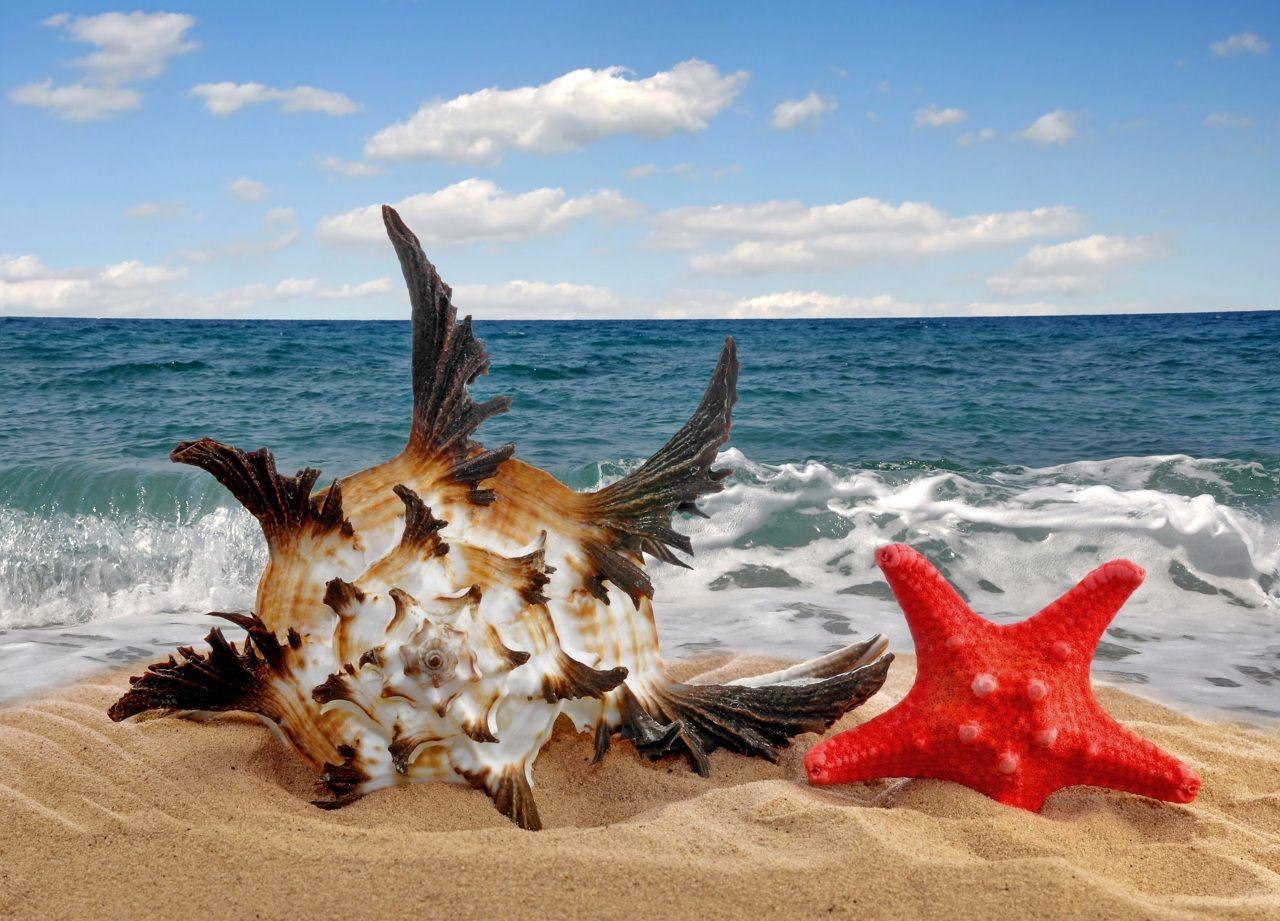 Concha Estrela-do-mar Mar Areia Naturaleza