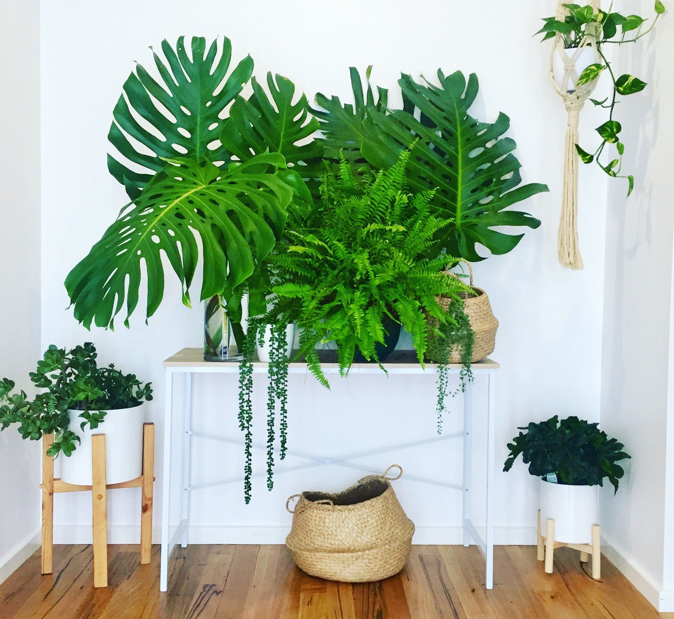 My Lush Indoor Garden In The Entrance Of Our House Plants Jungle Greenery Pot Plants Urban Jungle Monstera Plants Indoor Plants Indoor Garden