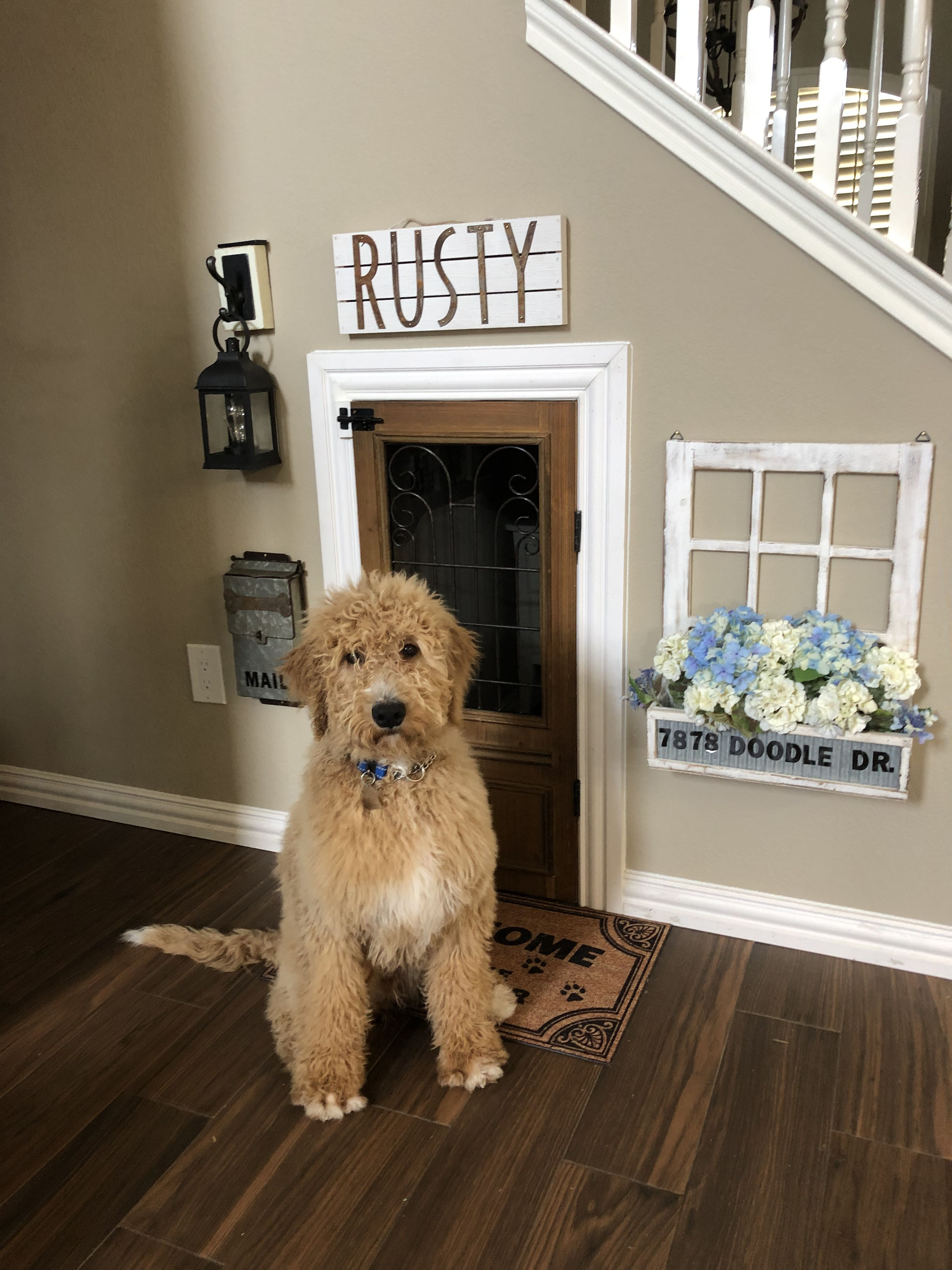 Under Staircase Dog Room Puppy Room Home
