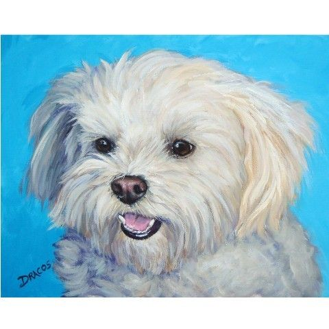 Maltese Art Print Of Original Acrylic Dog Painting By Dottie