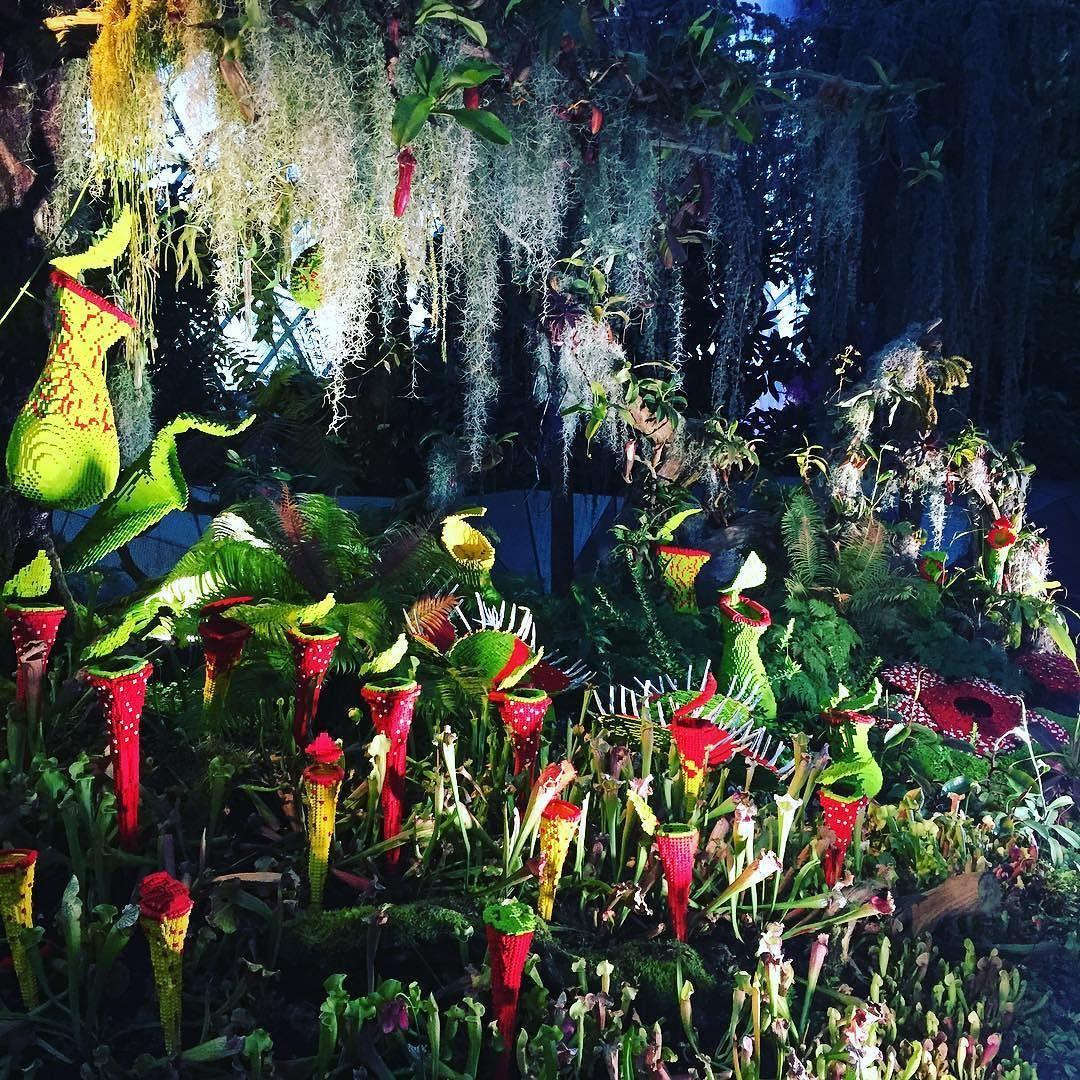 Saturday walkabout #weekend #venusflytrap #rafflesia #lego #garden #green #greenery #mystery by jeaneeus