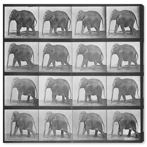 East Urban Home Leinwandbild Elephant in Motion von Oliver Gal   Wayfair.de #motiongraphic