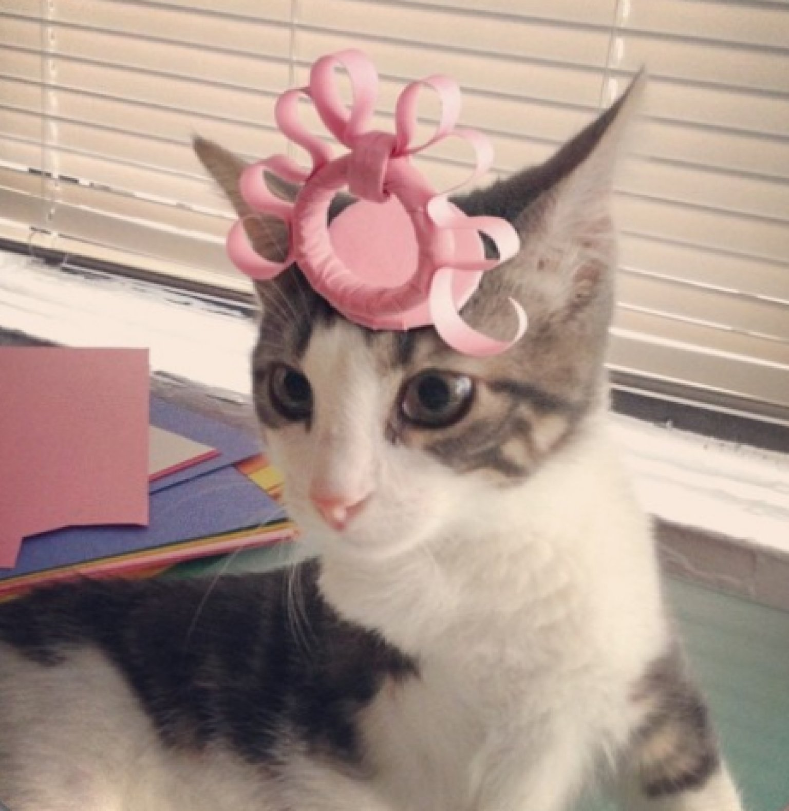 A Three Legged Kitty With A Certain Penchant For Hat Wearing Just Too Adorable More Pictures In The Article Cats Cute Cats Kitten