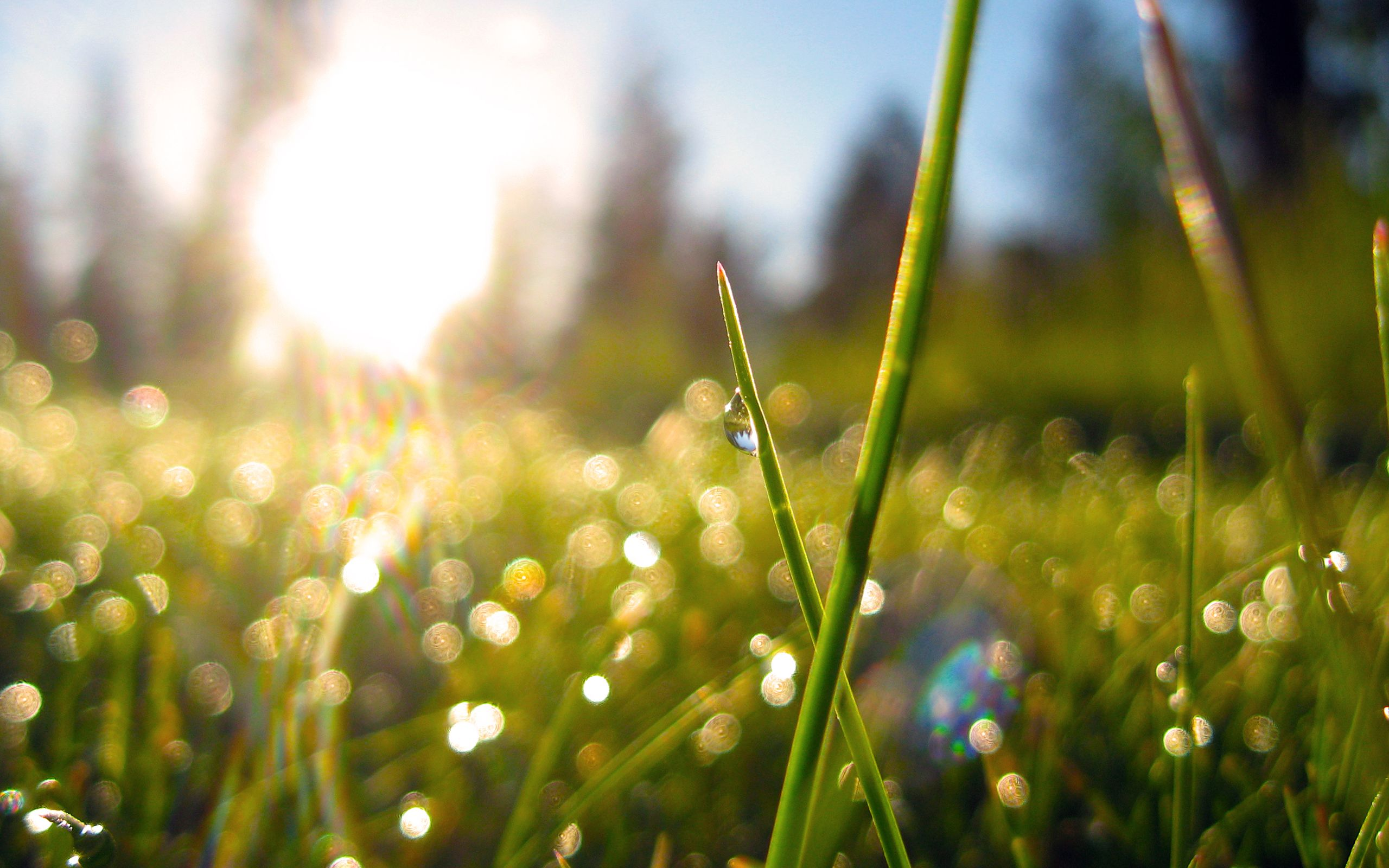 Morning Light Through Dewy Grass Grass Wallpaper Spring Wallpaper Uplifting Inspirational Quotes