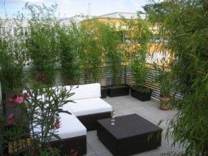 pflanzen als nat rlicher sichtschutz auf dem balkon rooftop garden pinterest rooftop. Black Bedroom Furniture Sets. Home Design Ideas