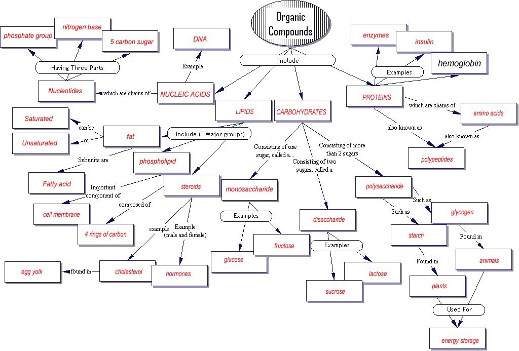 Organic Compounds Concept Map Biology Activity Concept Map