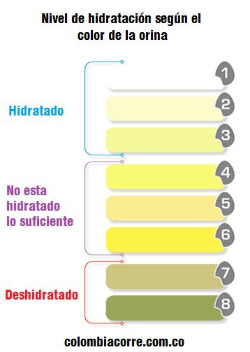 niveles de orina en adultos