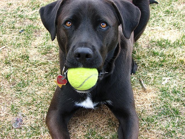 Ask A Dog Trainer How Do I Get My Dog To Fetch Things I Love