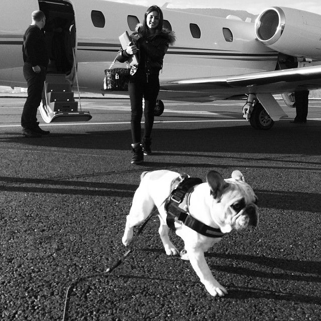 King B on tour #frenchie by samueldehaan#wpoi #flyprivate