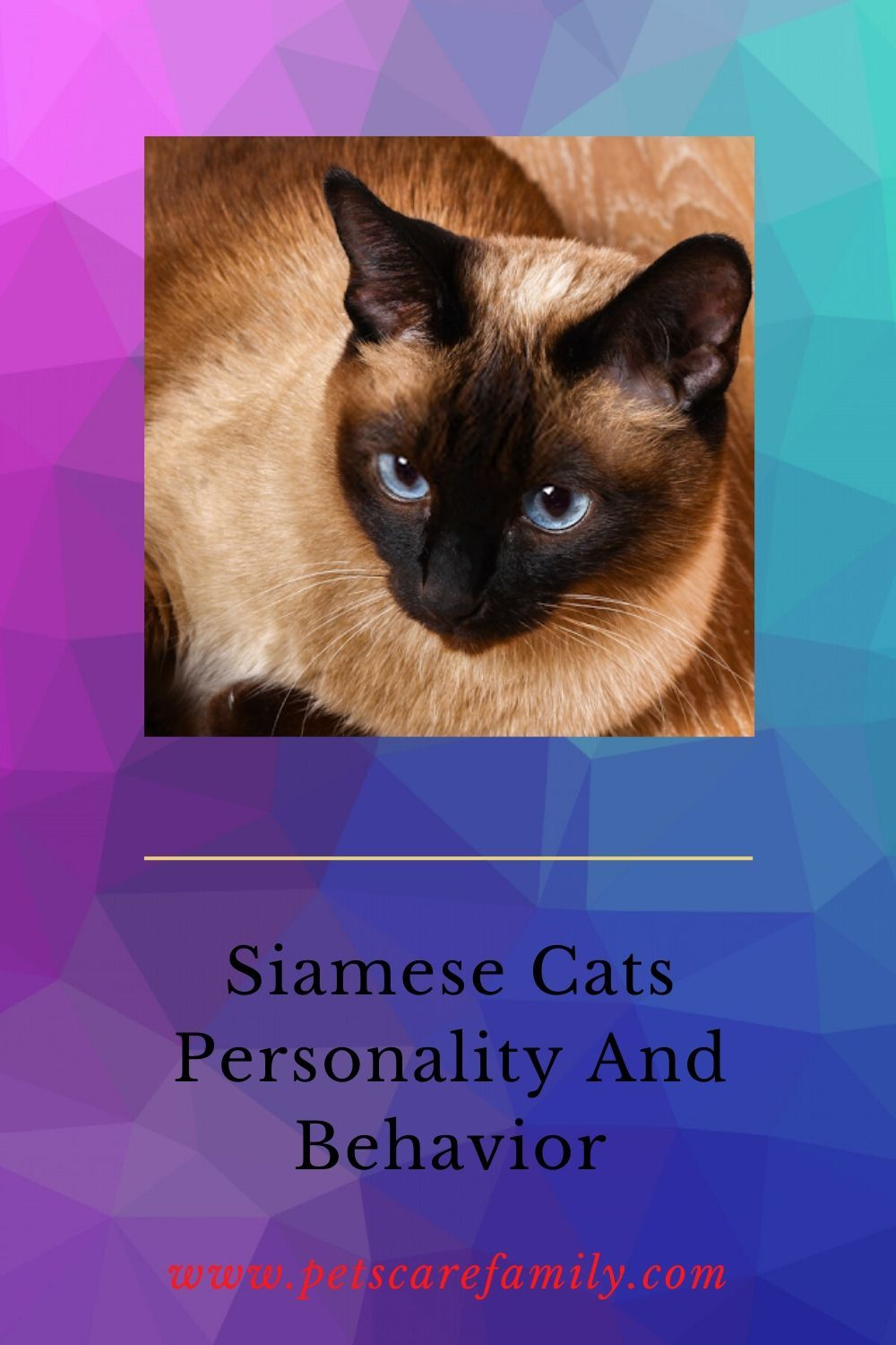 Siamese Cats Personality And Behavior in 2020 Cat