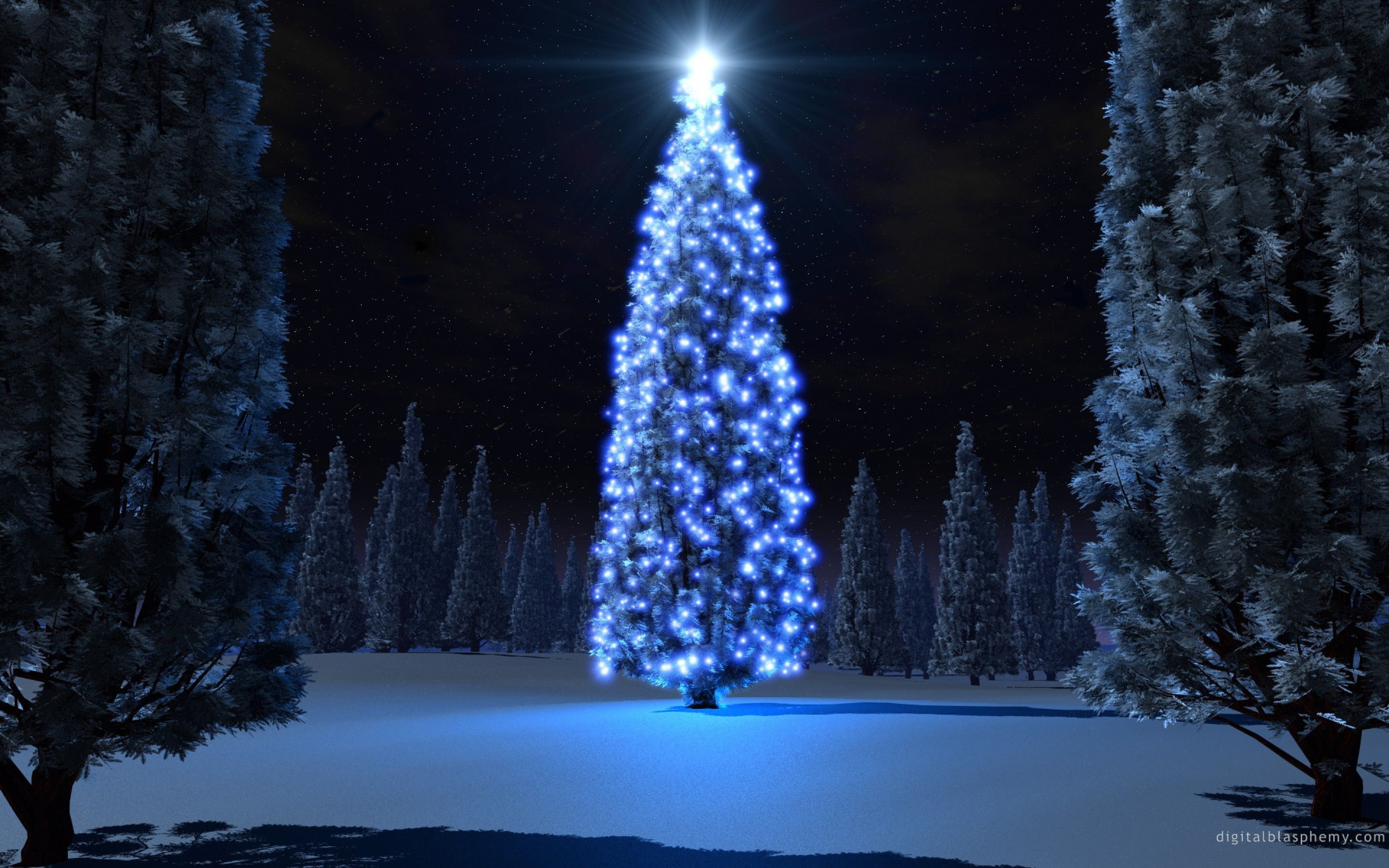 Beautiful Christmas Trees and Starlight Photo Gallery HD Wallpaper ...