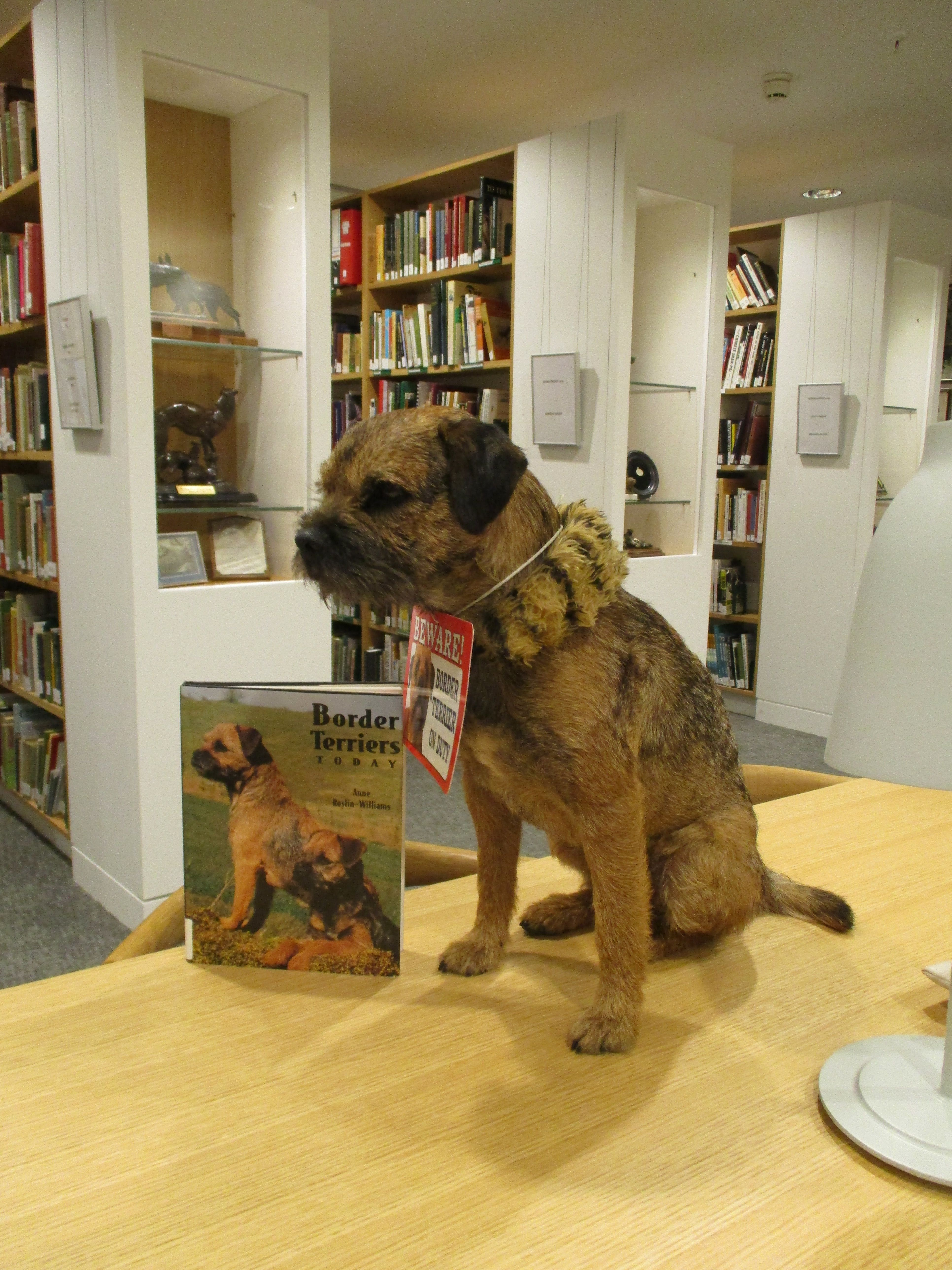 Kennel Club Library Border terrier, Terrier, Doggy