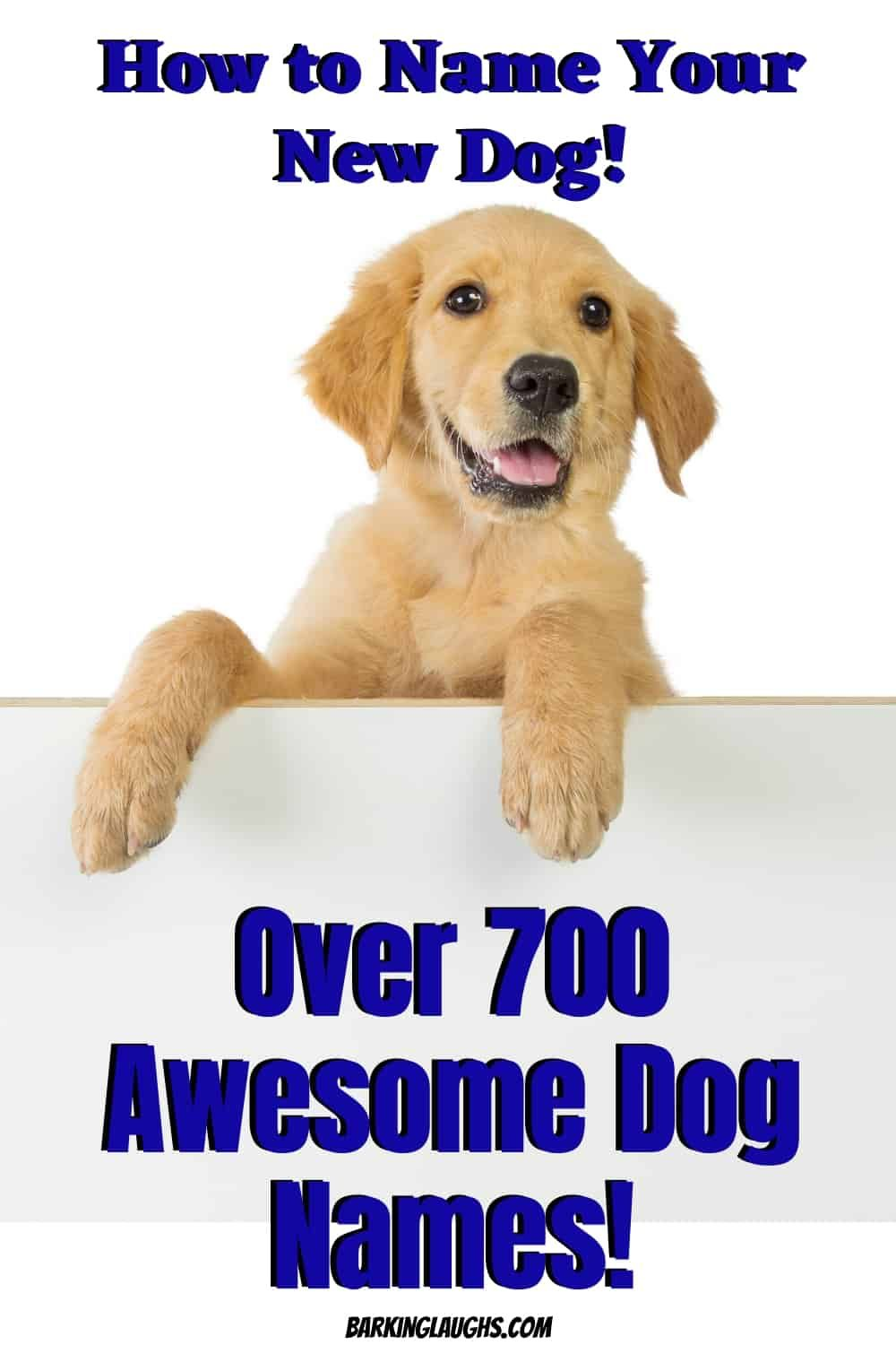 Over 1000 Of The Best Dog Names Update For 2020 Barking Laughs In 2020 Dog Names Best Dog Names Popular Dog Names