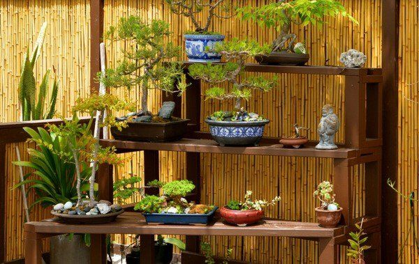 bonsai trees japanese garden design bamboo screens garden fence