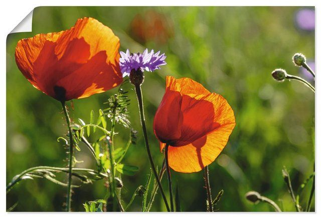 "Photo of Buy Artland Canvas Print ""Kurt Krause: Poppies in Spring"" online OTTO"