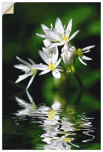 Photo of Products Premium Wandfolie S. Herppich: Bärlauchblüten mit Wasserspiegelung Ku…
